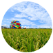 宜蘭縣冬山鄉親朋好友,親子同樂,大眾皆宜三奇稻浪-稻間美徑夏三奇稻浪-稻間美徑戶外活動,自然生態,人文藝術5月~6月以三奇稻間美徑為主軸,串連鄉內各景點,推展本鄉觀光景點。