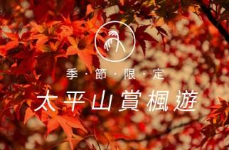 宜蘭縣大同鄉秋從夏季鮮紅的紫葉槭漸漸轉變成深紅色,看上去就宛如楓葉一般,而且在初秋時分就能前來欣賞,長滿前往森林遊樂區階梯的兩側,爬樓梯的時候,就像走在楓紅隧道裡,讓人情不自禁拍照拍不停呢。