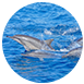 花蓮縣花蓮市家族旅遊,公司團康,不限花蓮港賞鯨 春,夏,秋,冬無自然生態,戶外活動,育樂體驗四季美麗的花蓮港是許多遊客的賞鯨勝地,不僅能欣賞花東海岸美景,也因太平洋海域位處黑潮地段,故有許多洄游性的魚類而形成鯨豚的棲息地之一,若您在盛夏時節賞鯨旺季造訪花蓮,別忘了也來趟賞鯨之旅留下美好的回憶喔!