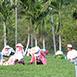 台東縣鹿野鄉家族旅遊,親朋好友,親子同樂鹿野高台觀光茶園夏無自然生態,戶外活動,育樂體驗平緩的坡度,良好的排水,最適合茶樹生長的土壤,高台的茶葉就是在這麼優質的環境下生長,位於鹿野鄉的高台觀光茶園,不僅擁有極佳的視野讓您盡賞整齊劃一的綠色茶園風光,茶園一帶更有飛行傘、滑翔翼練習場,讓您翱翔天際喔。