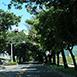 台東縣鹿野鄉背包客,親子同樂,親朋好友武陵綠色隧道春,夏,秋,冬無戶外活動,自然生態四季在鹿野鄉的永德到武陵之間台九號舊省道上,一條長約兩公里的綠色道路---武陵綠色隧道,其主要樹木為木麻黃及樟樹,在省道截彎取直之後,通行車輛減少,反成為當地民眾休閒遊憩的場所;漫步或騎自行車於其中,不僅可以大口呼吸森林芬多精,更可以享受大自然的陶冶。